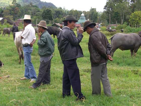 Local cowboys at a cattle market near Bukittinggi